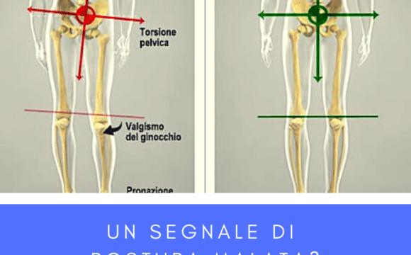 gamba più lunga